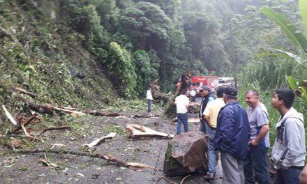Por intensas lluvias cae árbol en Teocelo, provocando el cierre a la circulación