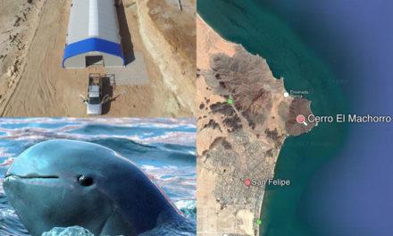 Inicia construcción de última esperanza de salvación de vaquita marina