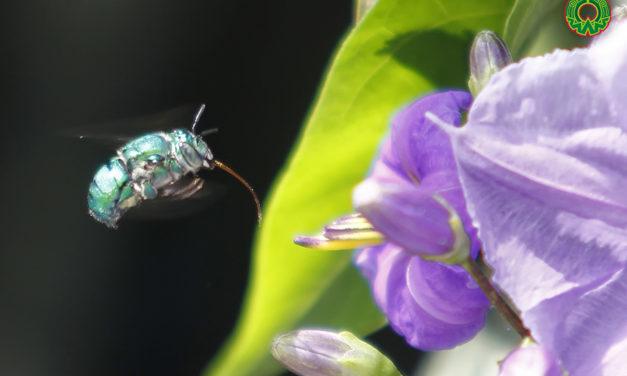 Flor y polen