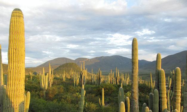 Encuentran huellas de dinosaurios en la actual Reserva de la Biosfera Tehuacán-Cuicatlán