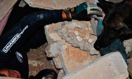 Héroes caninos de la UNAM han rescatado a seis personas