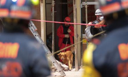 Binomios caninos, arriesgando una vida para salvar otras