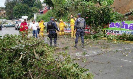 Lluvias provocan reblandecimiento de tierra y caída de árbol