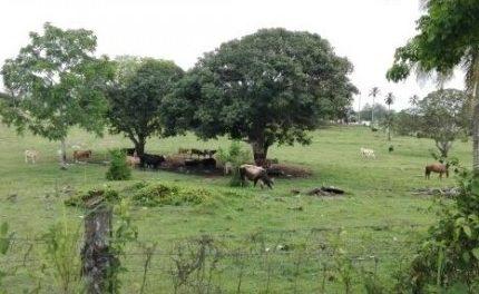 Por abigeato hay perdidas hasta de 200 mdp, reportan ganaderos