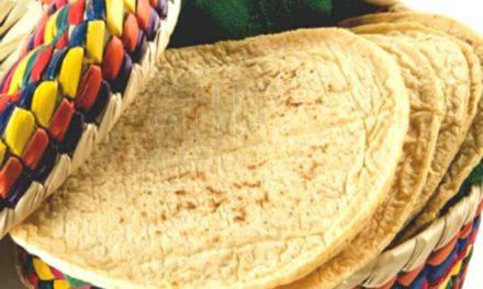 Más de 90 por ciento de las tortillas contiene maíz transgénico, revela estudio