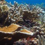 Mundo marino también se podrá explorar en 3D