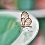 Mariposa, una maravilla de la naturaleza