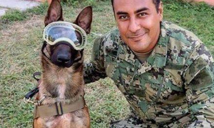 Amamos a Frida, pero no es el único canino que trabaja en labores de rescate. Conoce a Evil, Balto y Titán