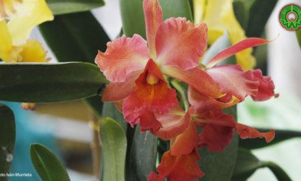 Galería: Exposición de orquídeas en el parque de Coatepec