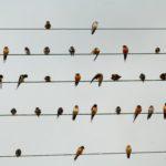 Las golondrinas, como acordes musicales