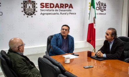 Adquirirán exportadoras, producción veracruzana de café de altura: SEDARPA