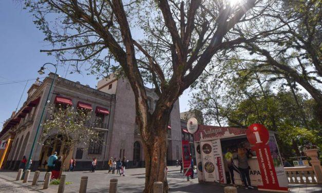 PARA PROTEGER A LA POBLACIÓN, RETIRARÁN DOS ÁRBOLES DEL PARQUE BENITO JUARÉZ