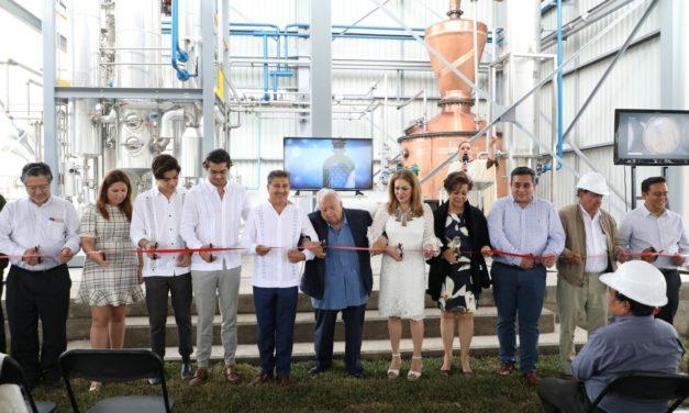 Caña veracruzana será utilizada para la producción de ron de alta calidad