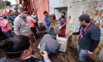 """""""Don chocolate"""", el abuelo que rescató hasta 50 perros en Córdoba; ve su historia"""