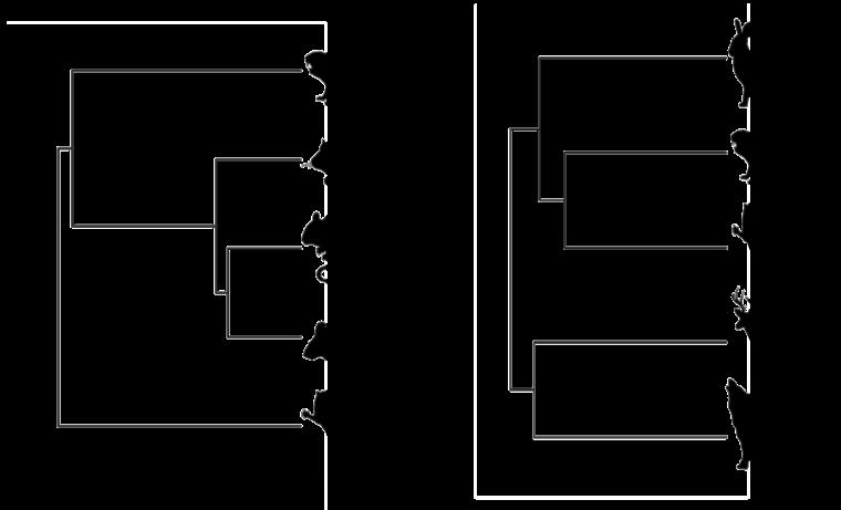 Figura 2: Dos comunidades (de las islas hipotéticas en Fig. 1) con el mismo número de especies pero diferente composición e historia evolutiva (Axel Arango).