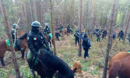 Policías de Veracruz y Puebla realizarán operativos para evitar la tala en el Cofre de Perote