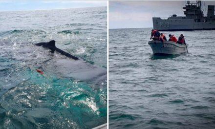 Rescatan a ballena atrapada en costa de Baja California