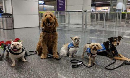 """La """"brigada"""" que ayuda aliviar el estrés en el aeropuerto de San Francisco"""