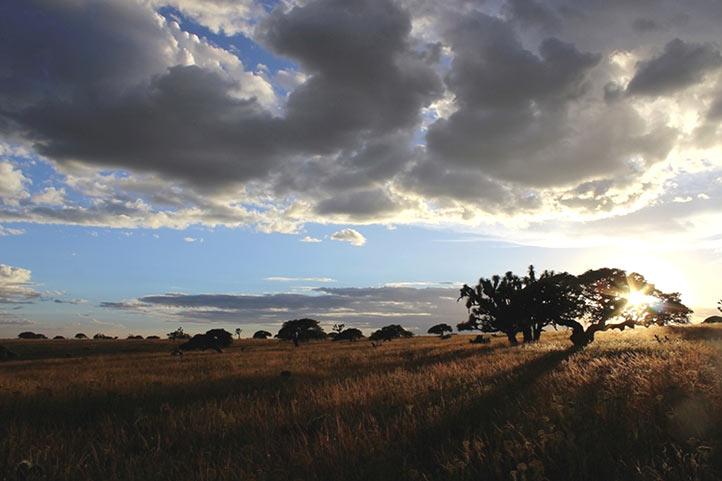 El estudio se desarrolló en la zona árida de Aguascalientes (Foto: José Arturo García)