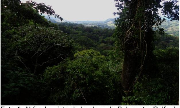 Una frontera desconocida: la copa de los árboles
