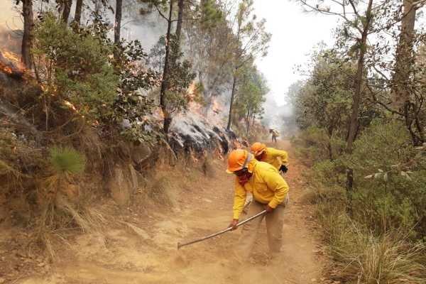 Se registran 24 incendios forestales en ocho estados del país; 12 están activos