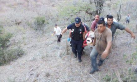 Cae camioneta con ganado a barranco en la carretera Xalapa – Alto Lucero