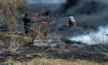 IPAX y Bomberos de Veracruz sofocan incendio