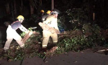 Caída de árbol en la carretera vieja Xalapa-Coatepec, a la altura de La Pitaya