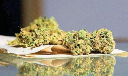 Senado avala en lo general dictamen sobre regulación de la mariguana