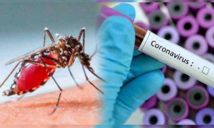 Veracruz, primer lugar en dengue con 531 casos