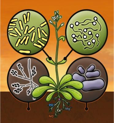 Figura 3. El microbioma de las plantas es un conjunto de microorganismos como hongos y bacterias, que viven en sus raíces, tallos, hojas y flores. Fuente: Internet