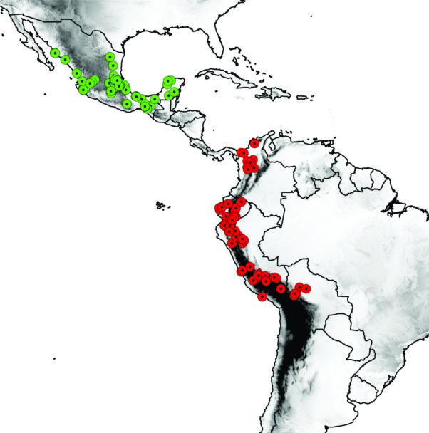 Figura 2.- Mapa que muestra en centro de origen del tomate silvestre (círculos en rojo) y la región de domesticación (círculos en verde).