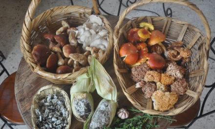 México, pueblo que come hongos. I. Especies silvestres y cocina nacional