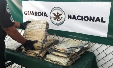 Decomisan 9 piezas de piel de cocodrilo en el aeropuerto de San Luis