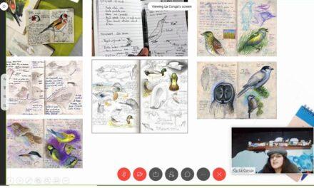 Observación de aves, necesaria para comprender mejor los ecosistemas