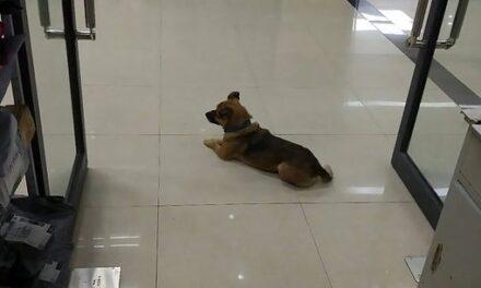 Perrito espera por meses a su dueño en hospital; no sabe que falleció de Covid-19