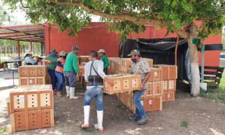 Trasladan 9 mil 886 tortugas vivas a QuintanaRoo y Yucatán las cuales pretendían exportarse a China de manera irregular