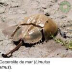 LA CACEROLITA DE MAR