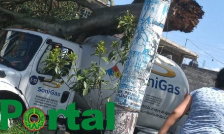 Le cae árbol a pipa de gas en la colonia Revolución