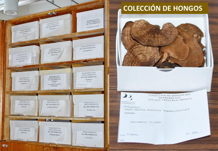 Foto B. Colección de Hongos - Sergio Avendaño