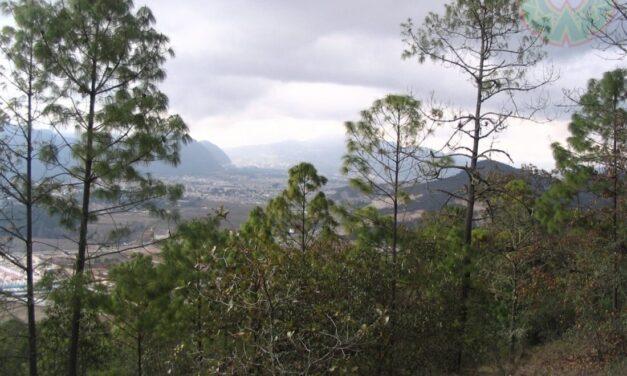 FRAGMENTACIÓN DEL HÁBITAT EN PLANTAS: UN MÉTODO PARA ESTUDIARLA