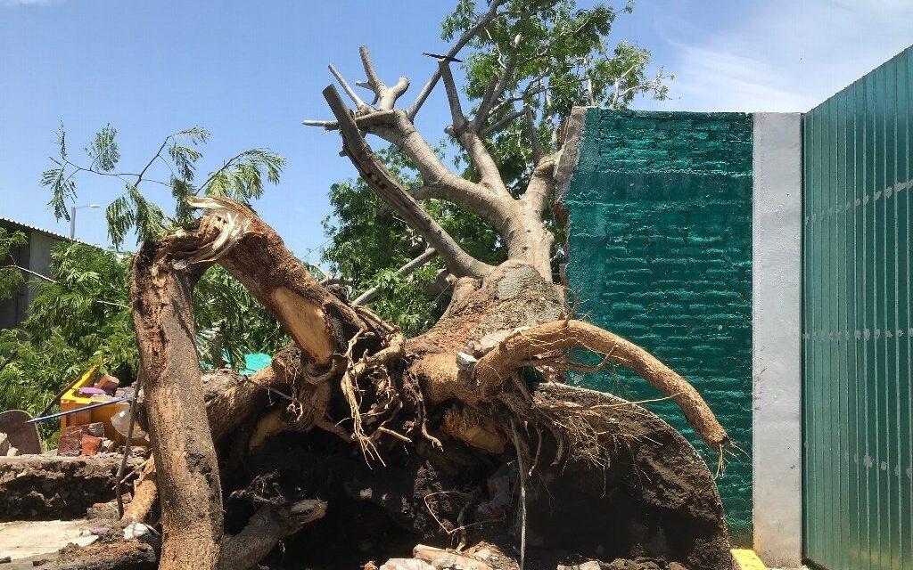 Cae árbol destroza barda y daña camión urbano en colonia de Boca del Río