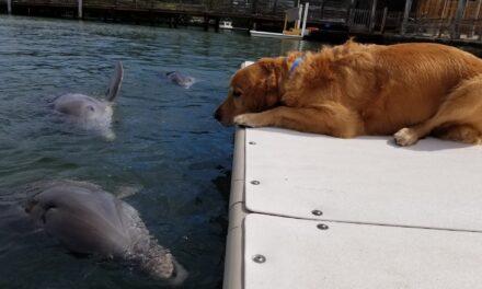 Gunner y Delta: Desde hace 10 años un perro y un delfín son mejores amigos