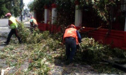 Sin afectaciones graves por tormenta que azotó en Xalapa durante la madrugada