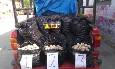 Aseguran 25 mil huevos de tortuga contenidos en 50 bolsas de plástico