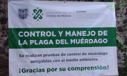 CONTROL DEL MÚERDAGO EN CDMX