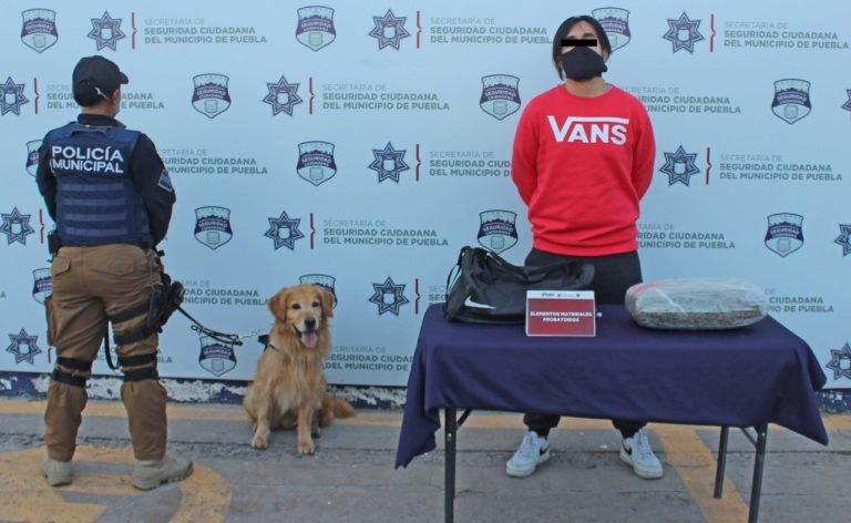 Lo detienen en la CAPU pretendía trasladar 4 kilos de marihuana a Orizaba