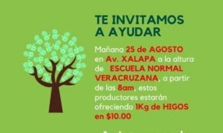 Productores de Higo de la zona de Tatatila, estarán en la avenida Xalapa mañana martes