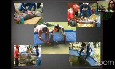 Participación comunitaria, fundamental para la conservación del manatí