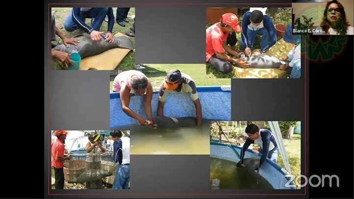 La UV realiza diversas acciones en pro de la conservación del manatí